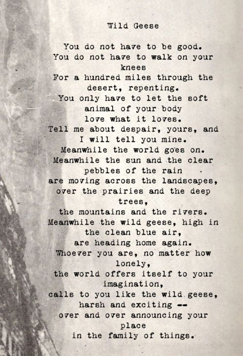 Mary Oliver Love Quotes Adorable Mary Oliver Love Poems