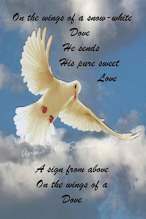 Lyric on the wings of a snow white dove lyrics : Dove Poems Poems