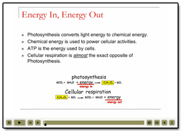 Photosynthesis Poems Poems