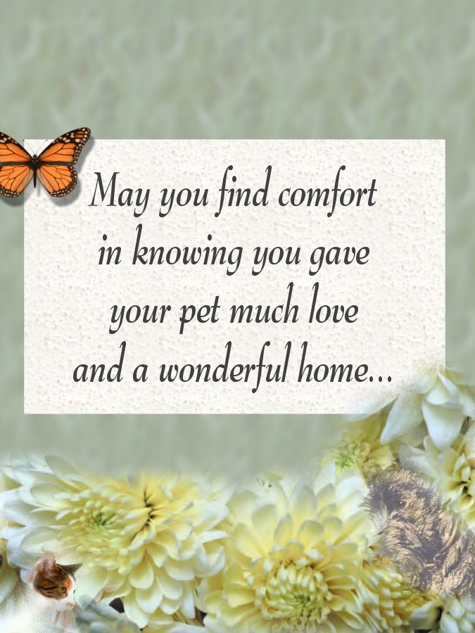 Image result for animated cat condolences . pet