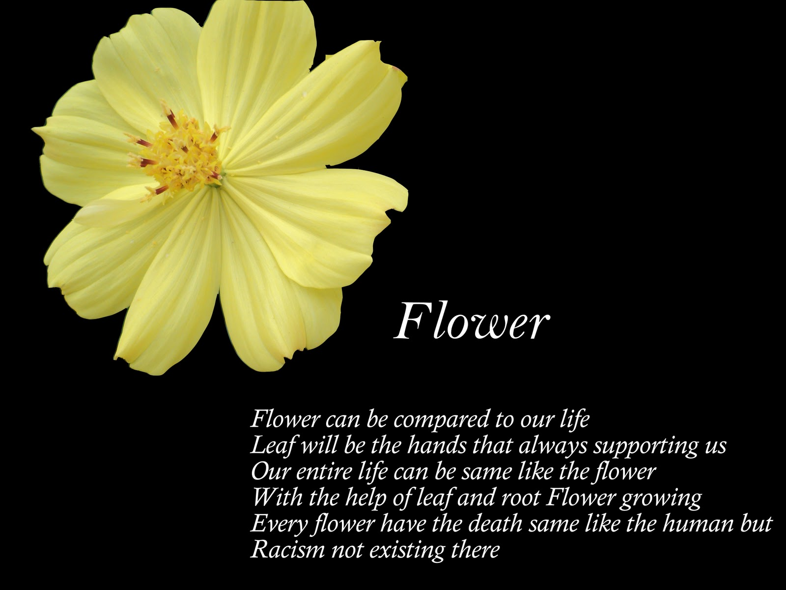 Flower poems izmirmasajfo
