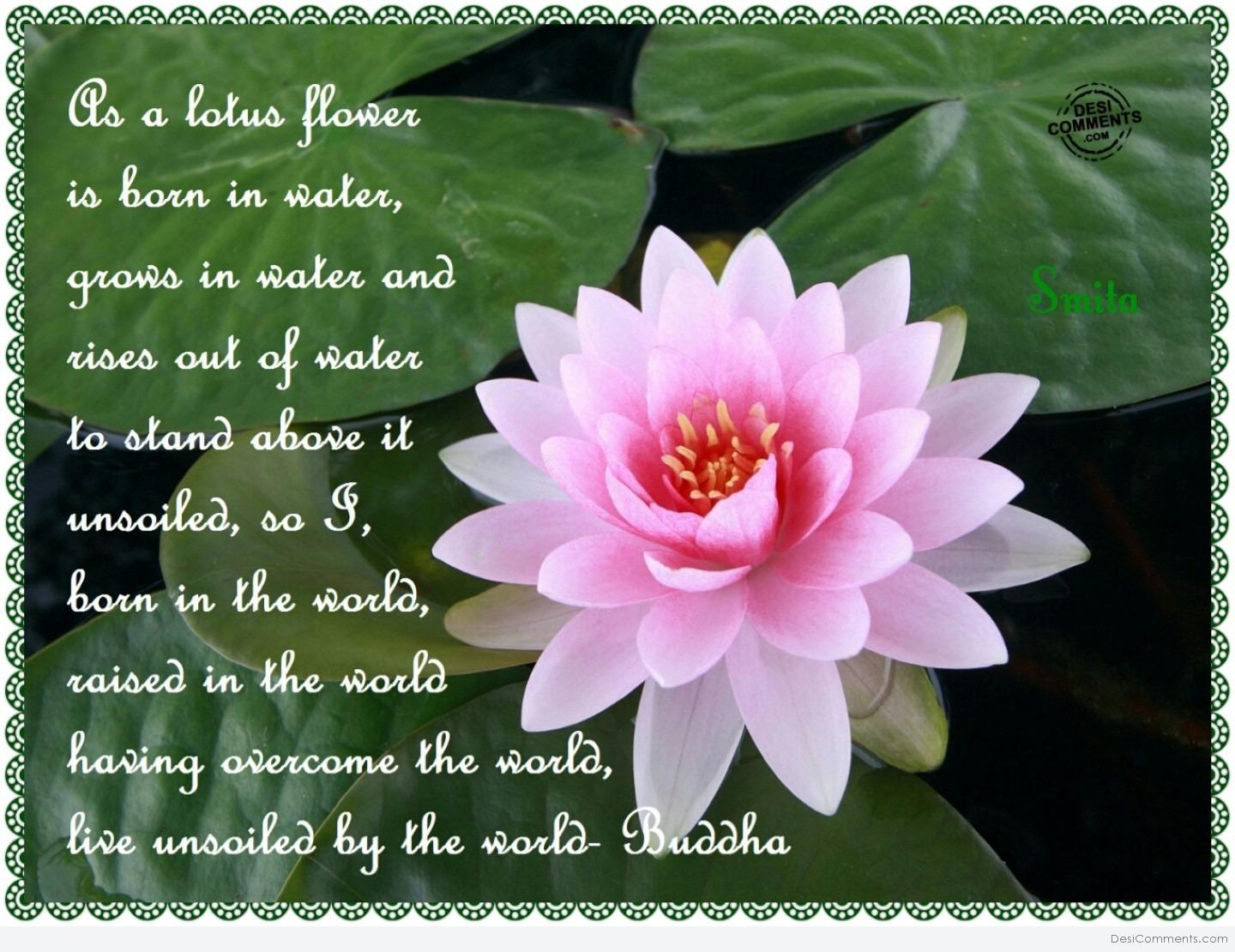 Lotus poems izmirmasajfo