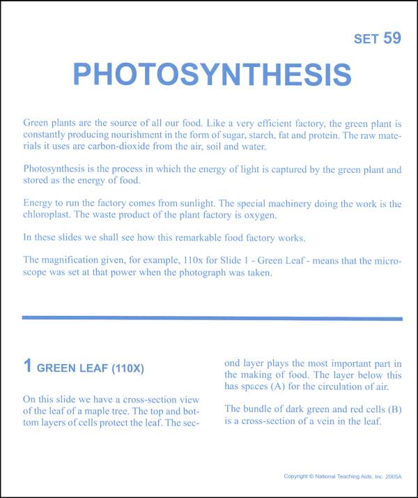 Photosynthesis Poems