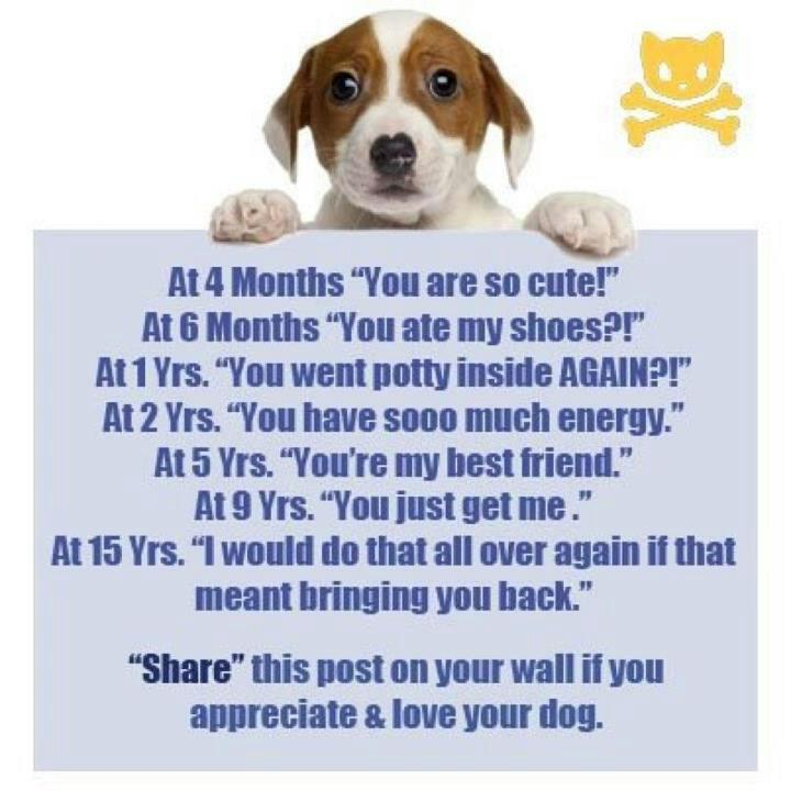 Love Dog Poems New I Love My Dog Quotes