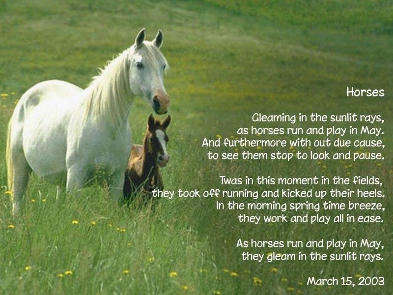 Horses Poems