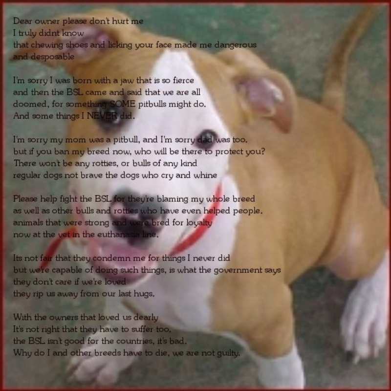 Im sorry love Poems