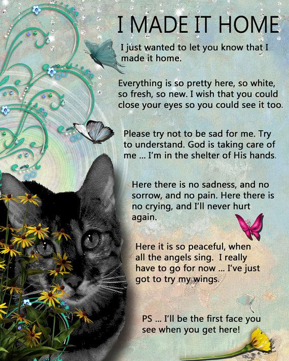 Cat Loss Quotes Cool Cat Loss Poems