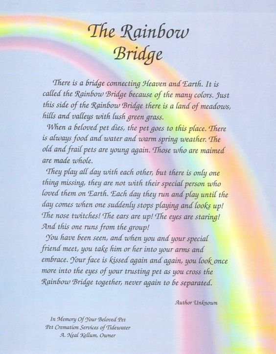 Satisfactory image inside rainbow bridge poem printable version