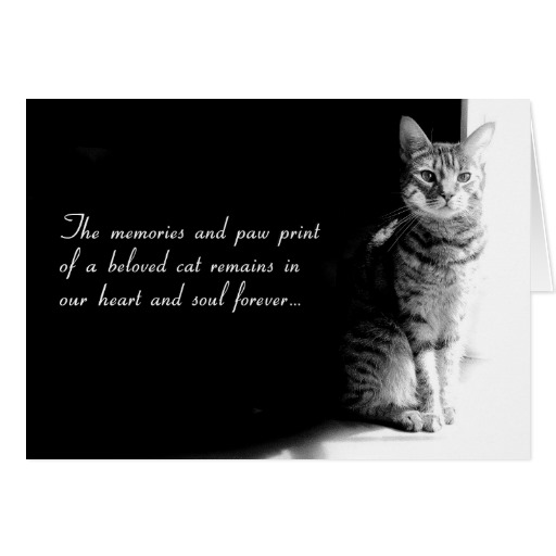 Cat funeral Poems