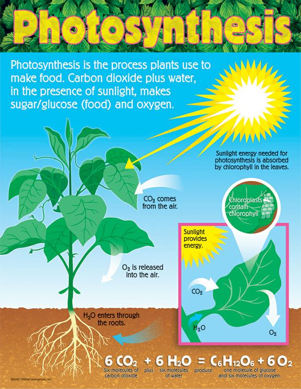 Photosynthesis poems ccuart Images