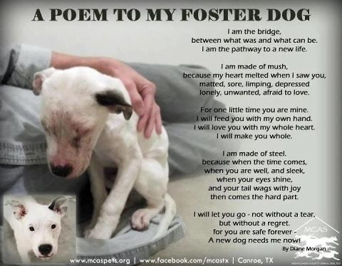 foster dogs quotes to my foster dog motivation